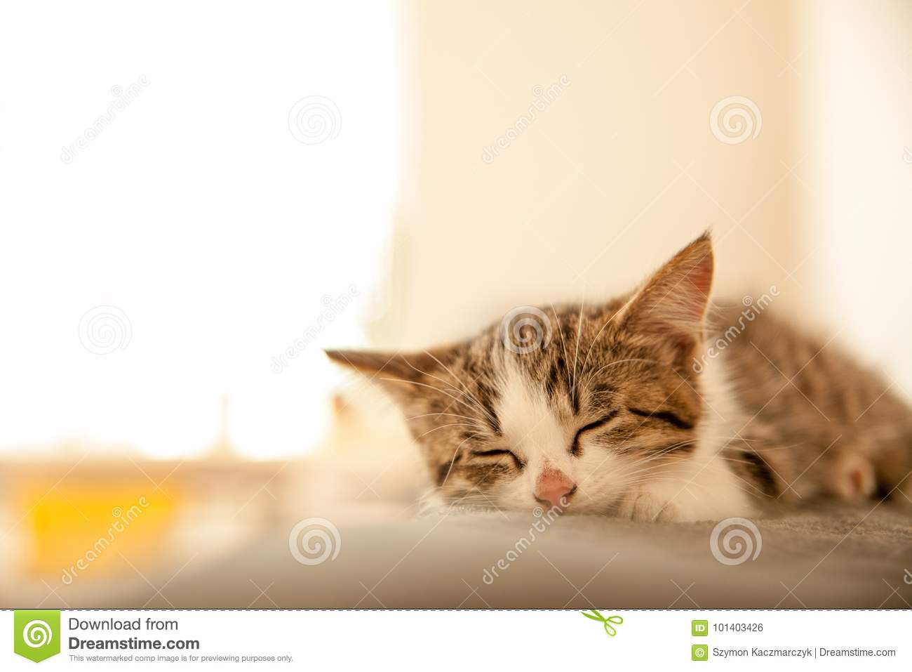 Little kitten sleeps on a coverlet. Small cat sleeps sweetly as a small bed. Sleeping cat in home on a blur light background.
