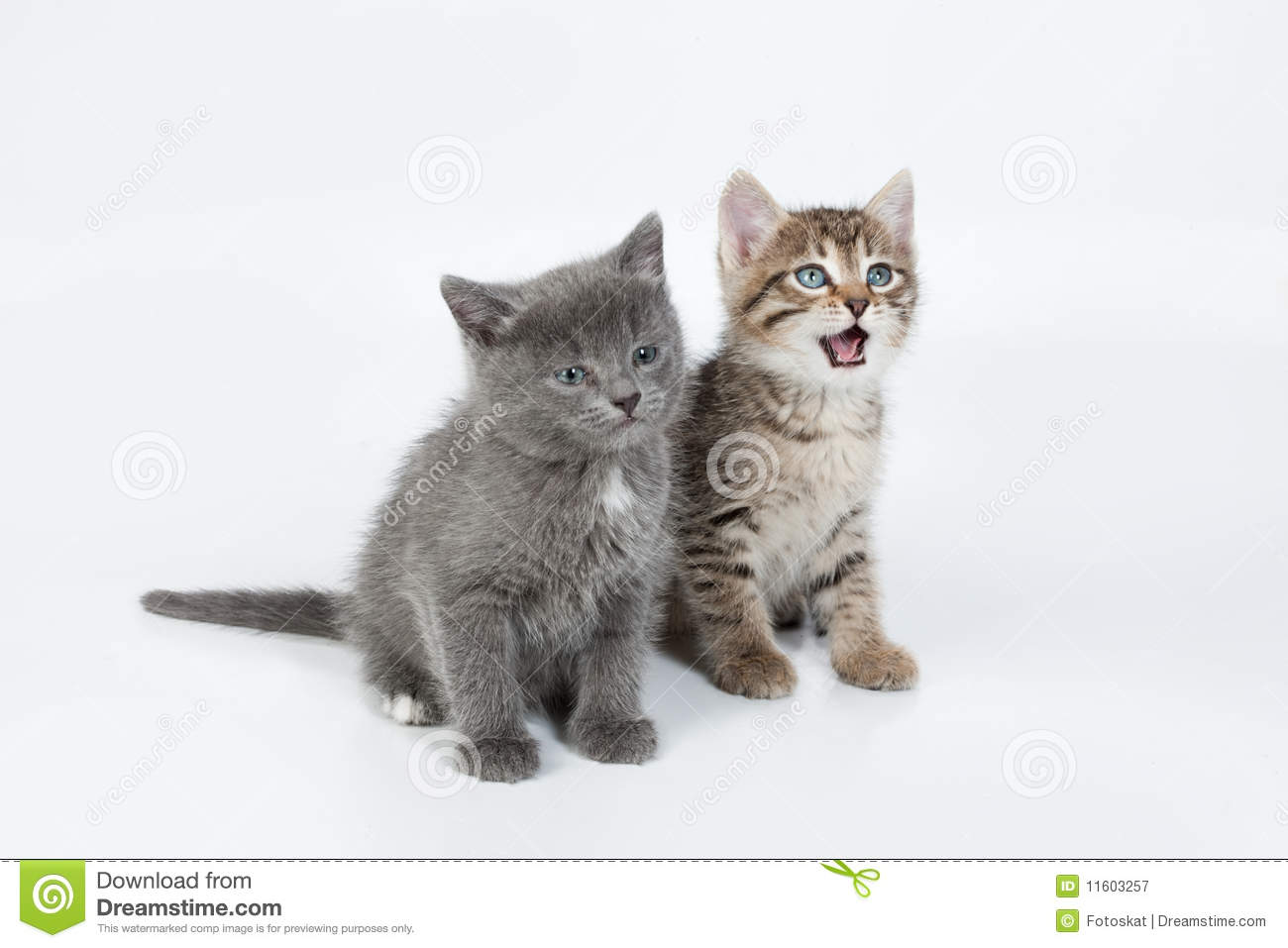 Little Kittens Royalty Free Stock Photography - Image: 11603257