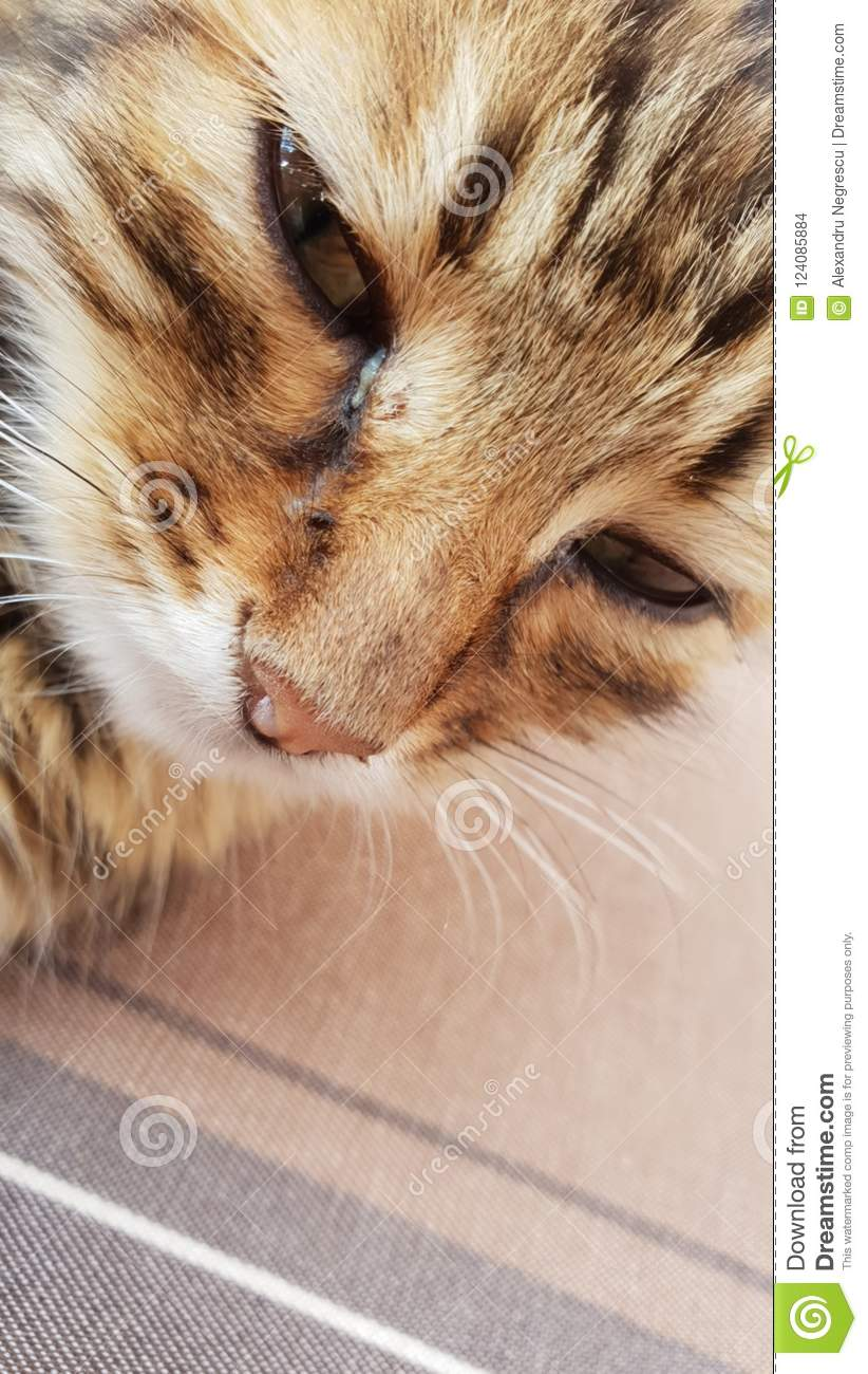 Apologise, but, lick the kitty pic reserve, neither