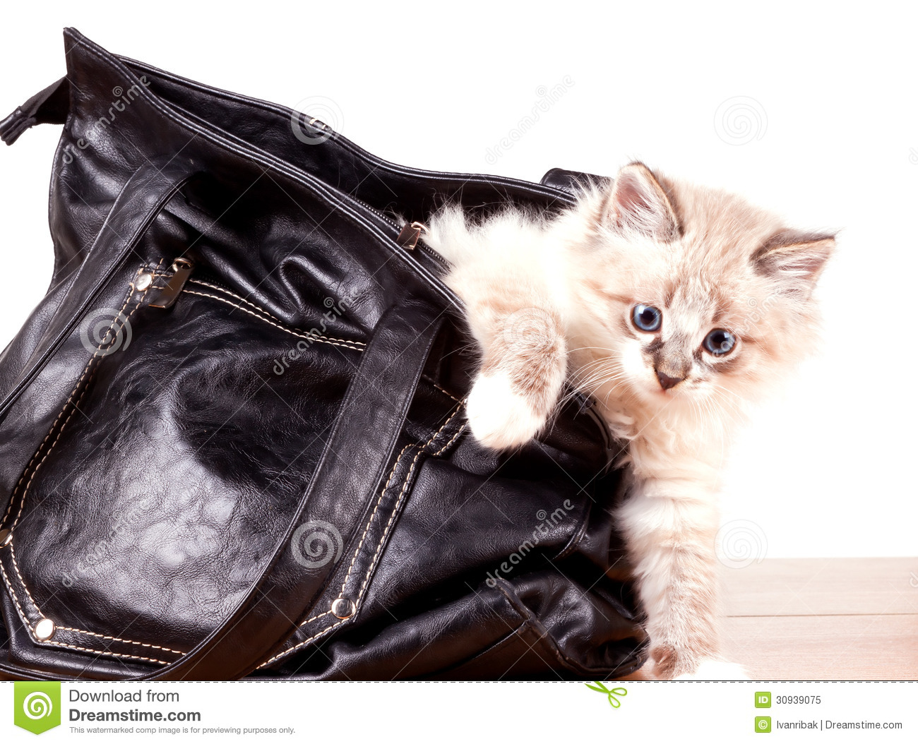 Little kitty gets out of the bag