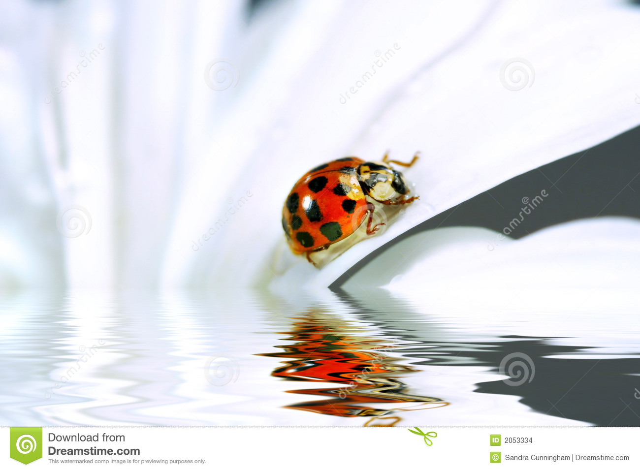 Free Download Ladybug Daisy Free Image HD Wallpaper