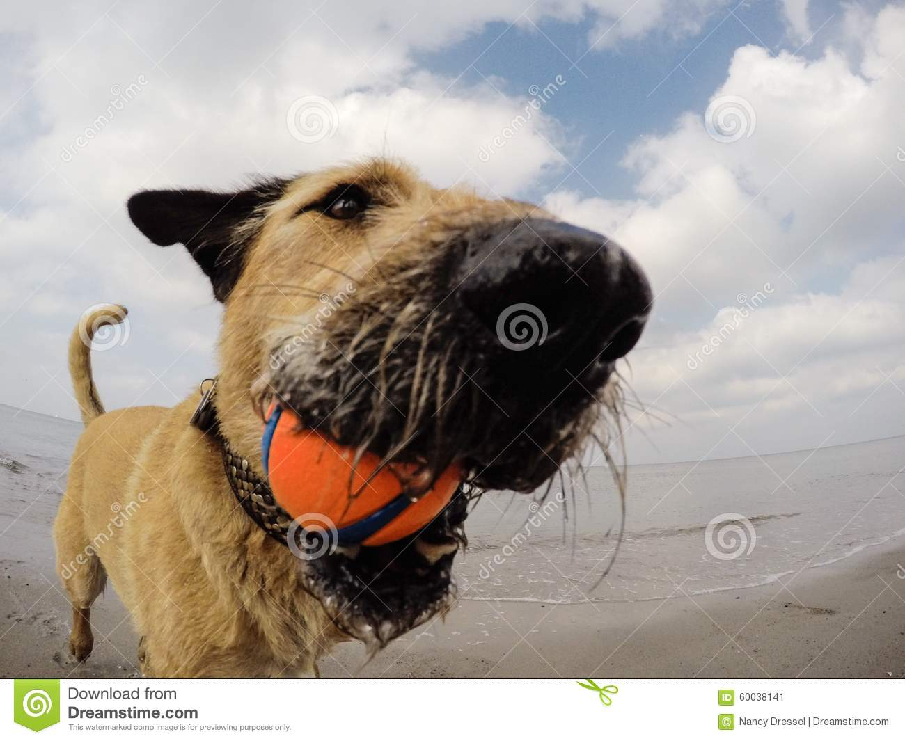 Little mixed dog playing with ball