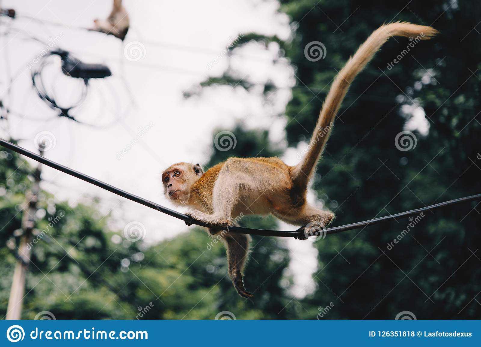 Little Monkey In Railay Beach Thailand Stock Photo Image