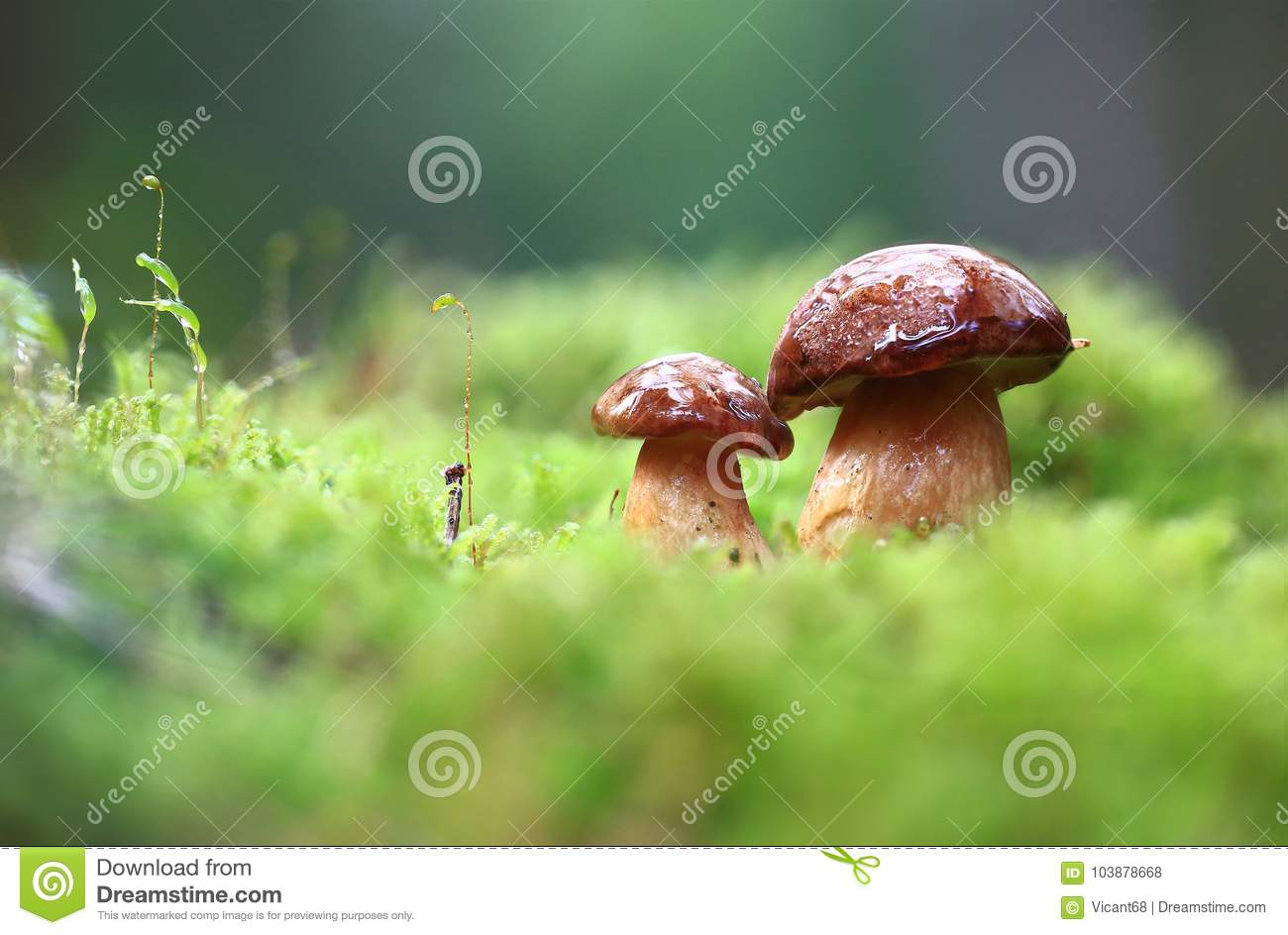 Little mushrooms after rain.