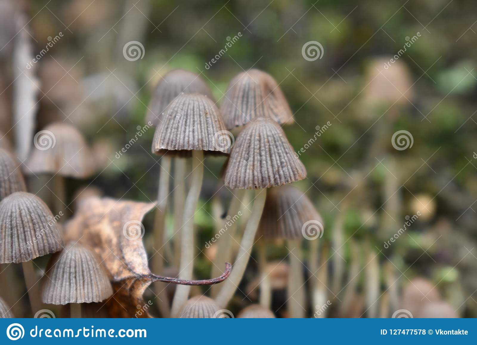 Little pair of mushrooms in the forest