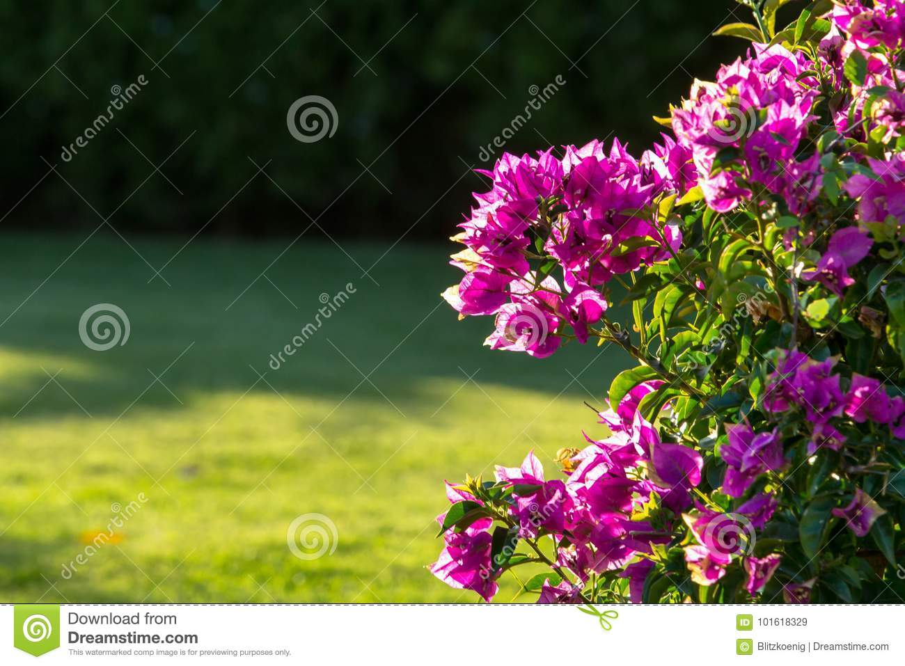Little Pink Flowers On A Bush Close Up Stock Image Image Of