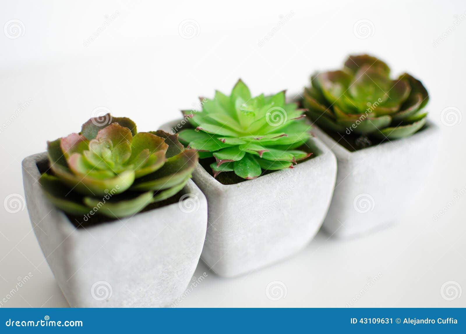 Little Plants Stock Photo Image 43109631
