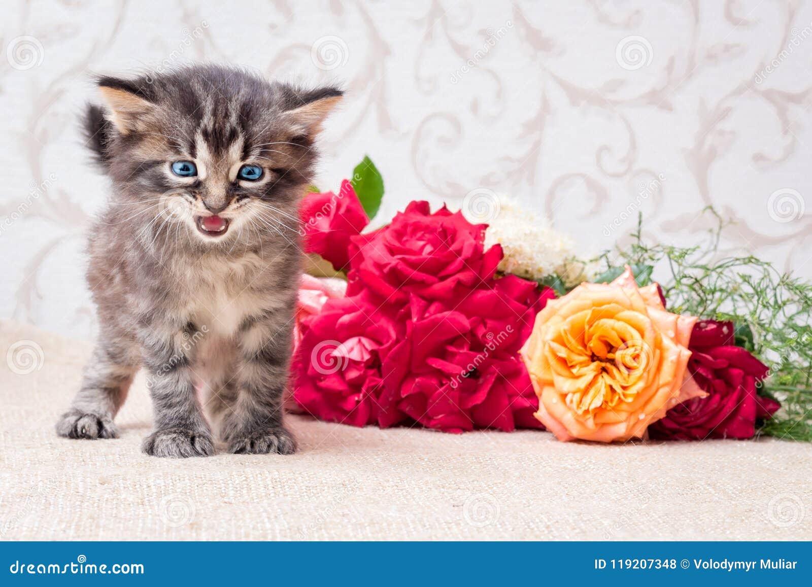 Little Playful Kitten Near A Bouquet Of Flowers. Happy Birthday_ ...