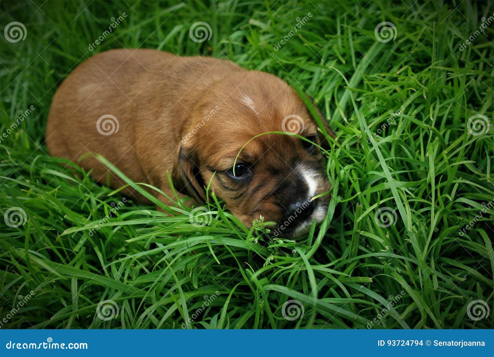 A little puppy on the grass