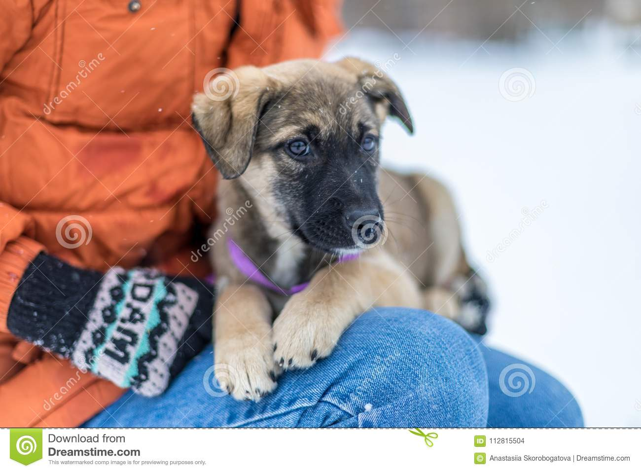 Little puppy in the snow