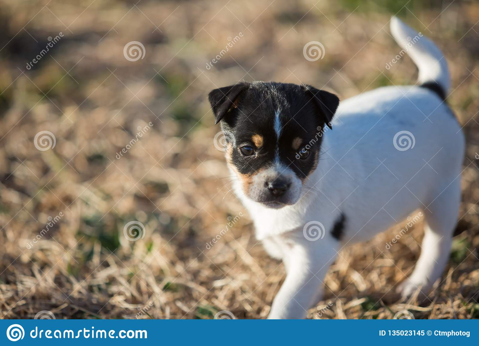 Little puppy in yard