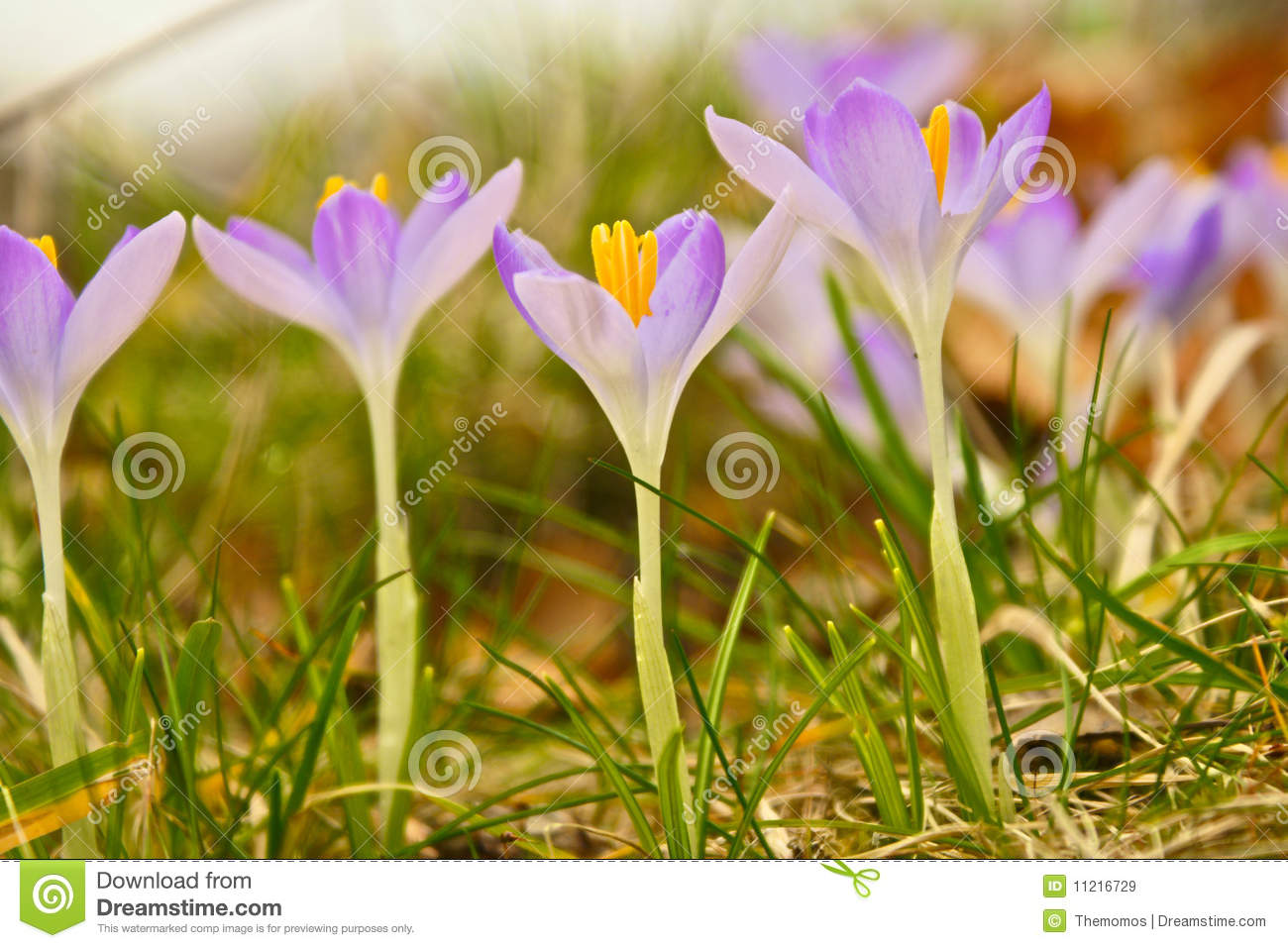 little purple flowers royalty free stock images  image, Beautiful flower