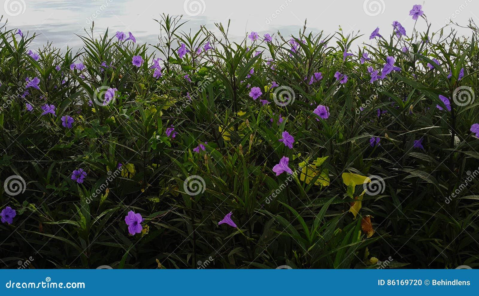 Little Purple Flowers In Green Bush Stock Photo Image Of Macro