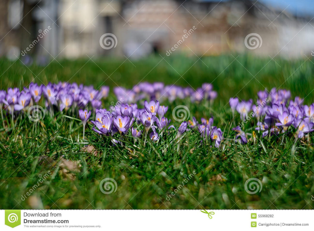 little purple flowers stock photo  image, Beautiful flower