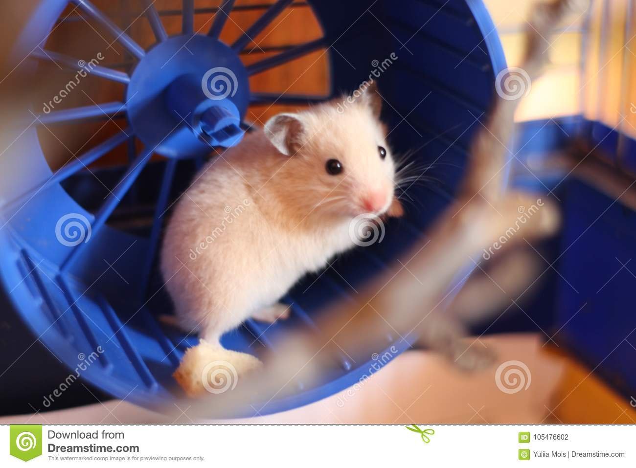 The little red hamster