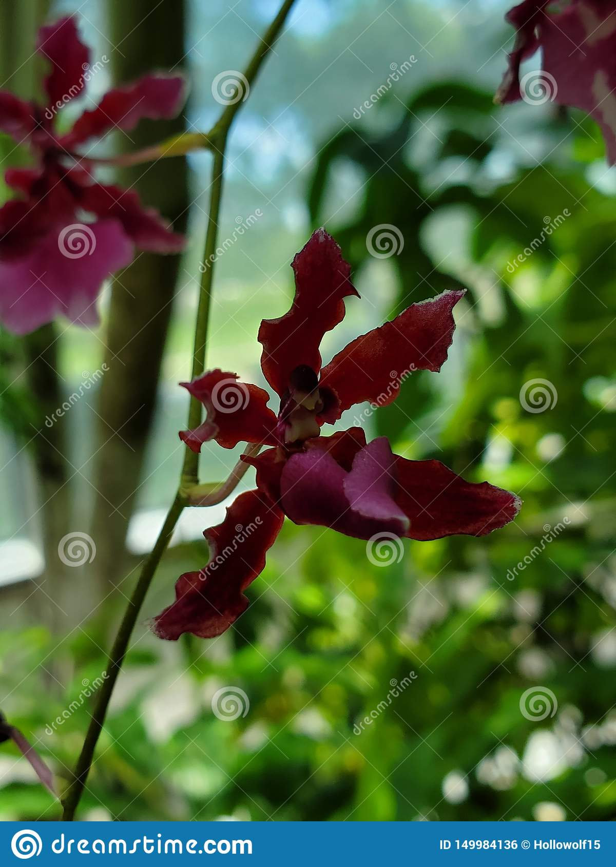 Little red orchid