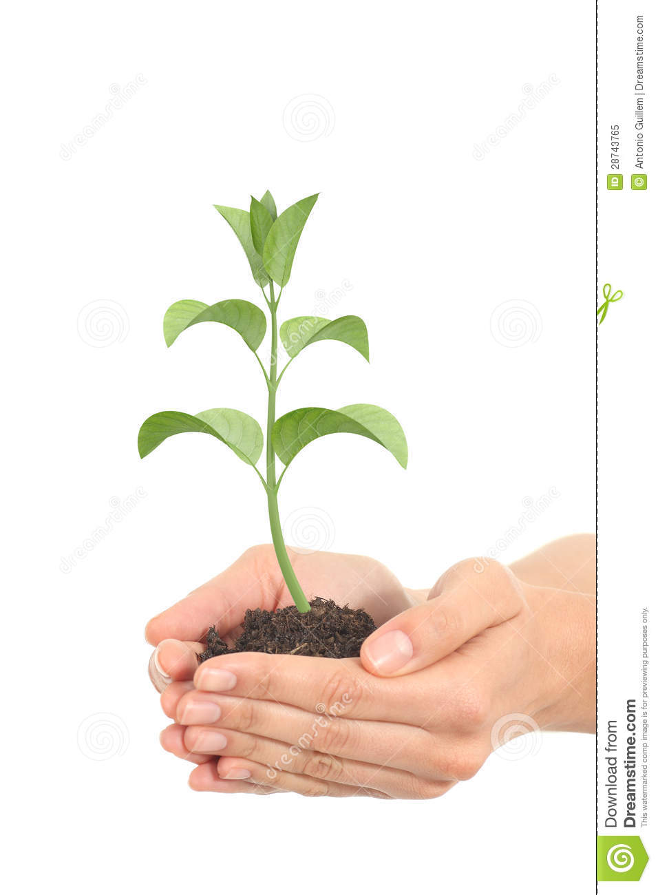 Little render of a plant growing in a woman hands stock for Plants that need little maintenance