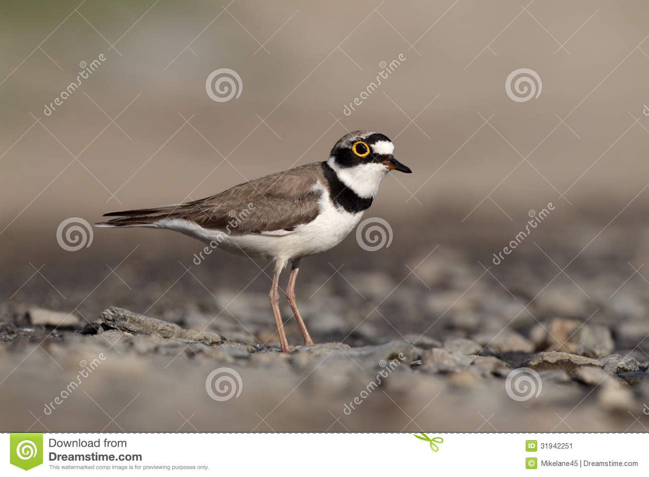 plover singles Learn plover search this site navigation  the nine-key alphabet is a set of chords used by the third and little fingers on both hands to produce any single.