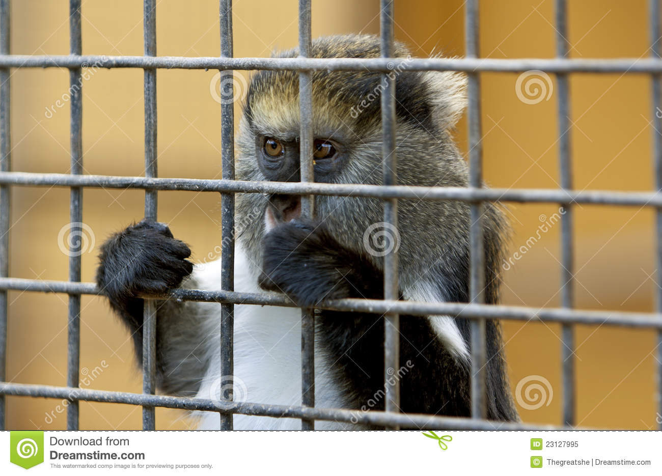 Sad Zoo Animals In Cages | Wallpapers Gallery