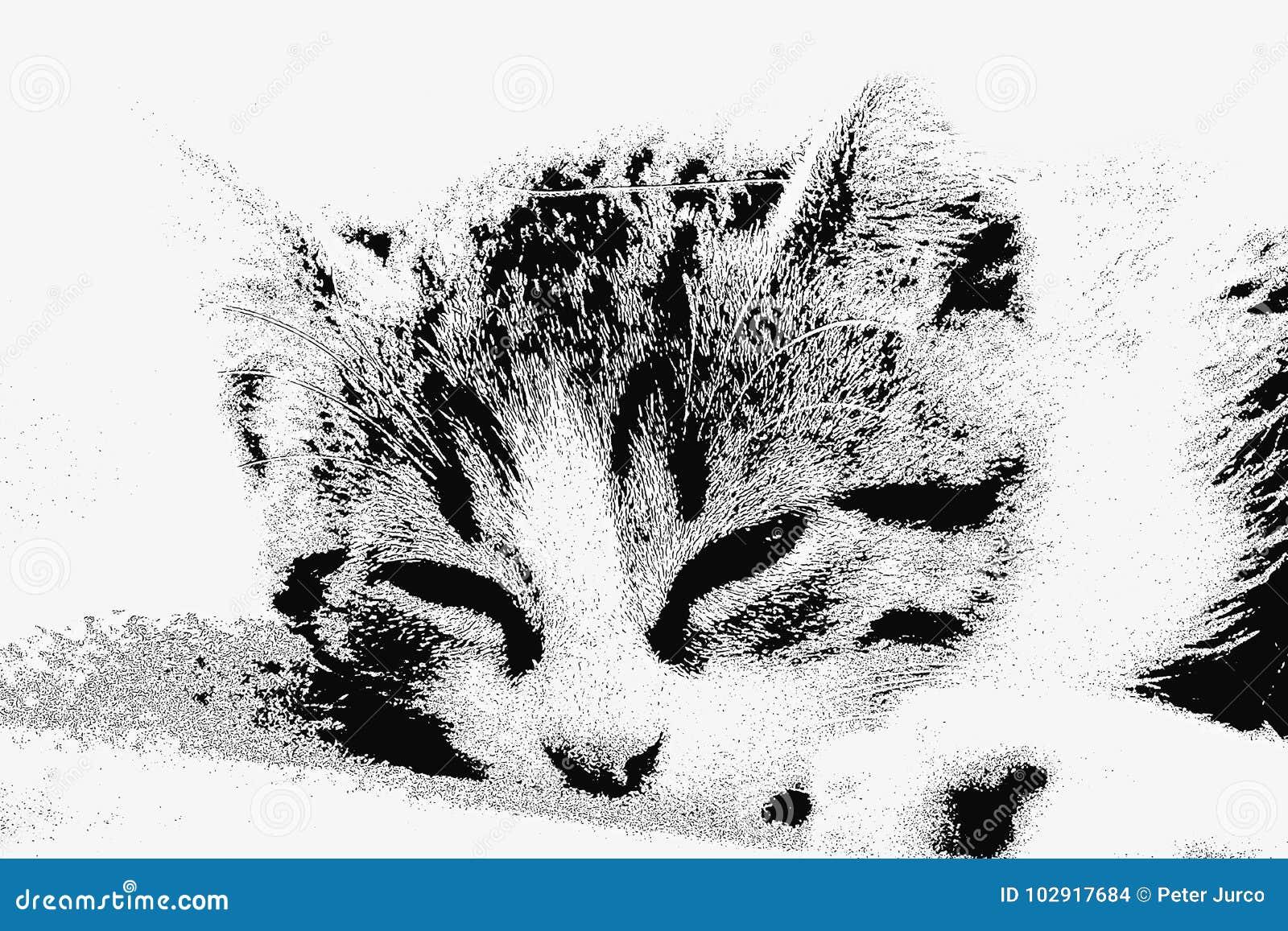 Little Sleeping Cat.