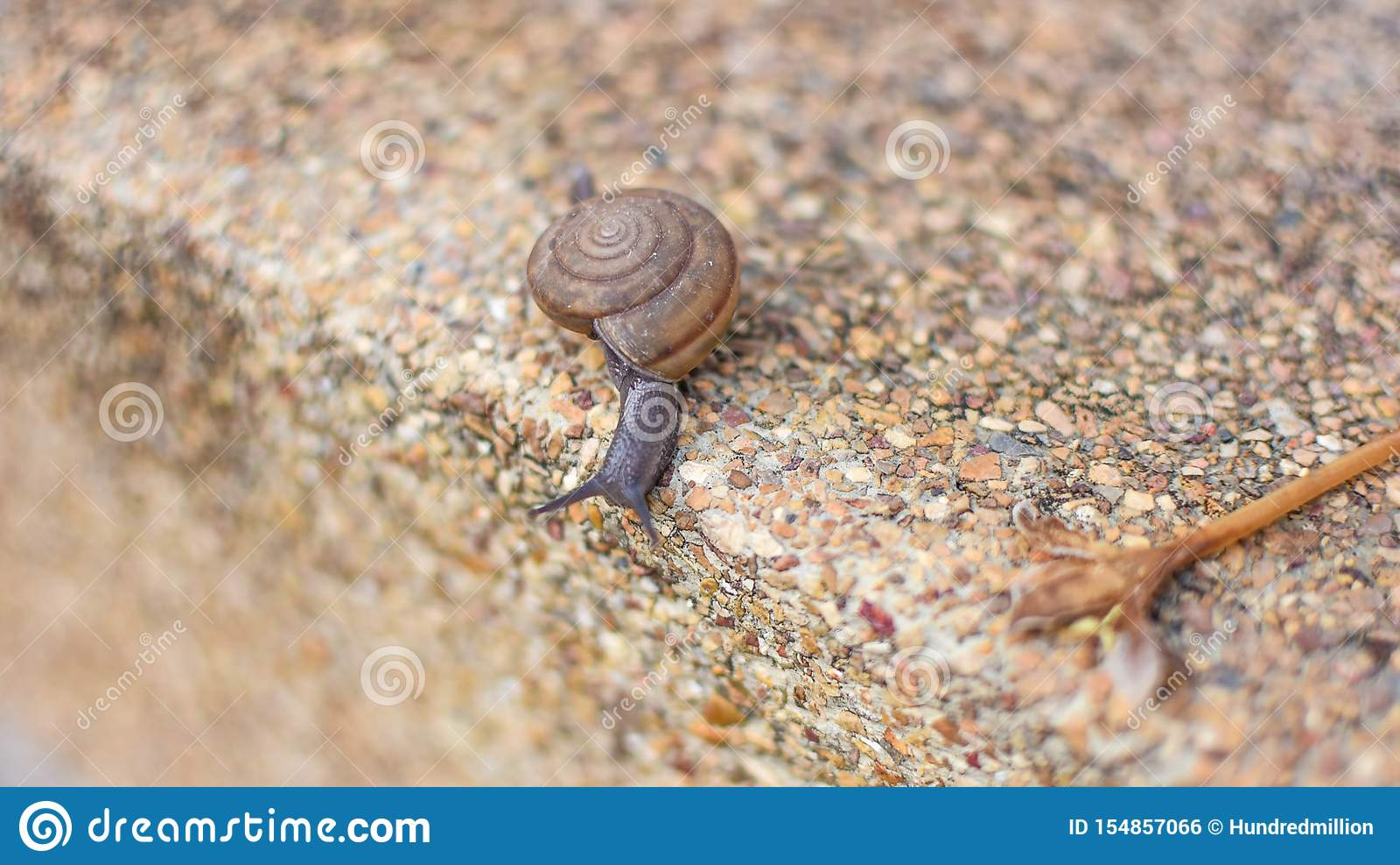 Little snails are walking around