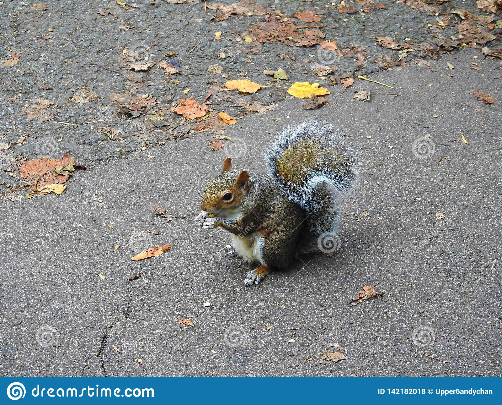 A little squirrel holding and eating a nut in the park