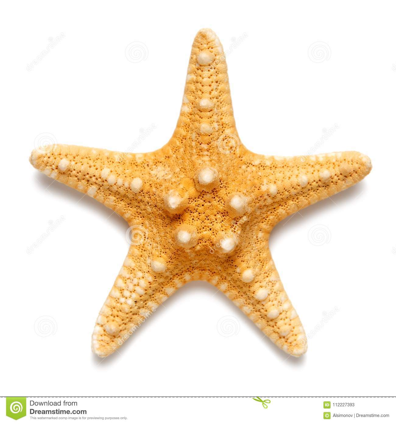 Little Starfish Yellow Color Isolated On White Background. Stock ...