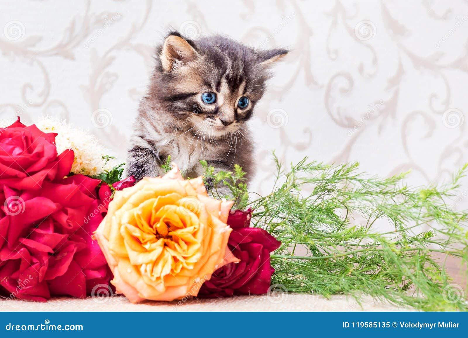 Little Striped Kitten With A Bouquet Of Flowers. Congratulations ...