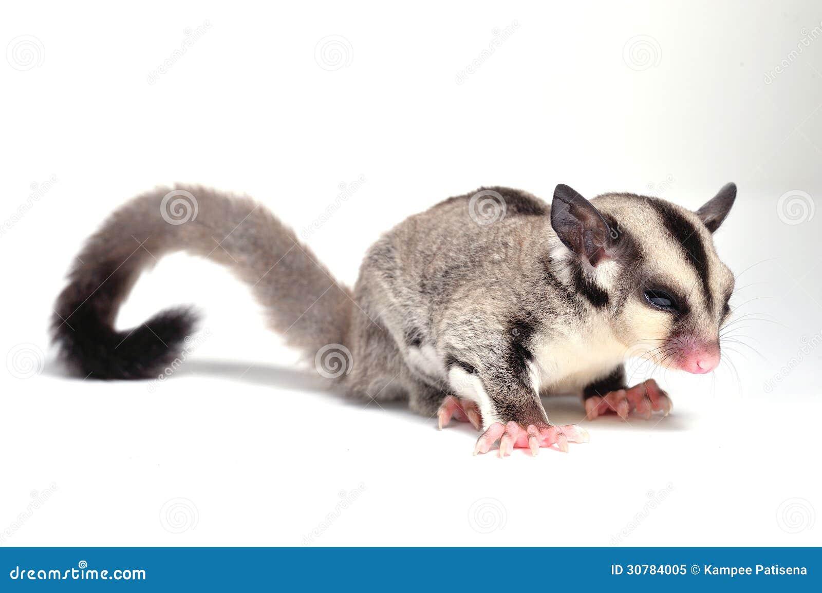 Hedgehog Preservation Society