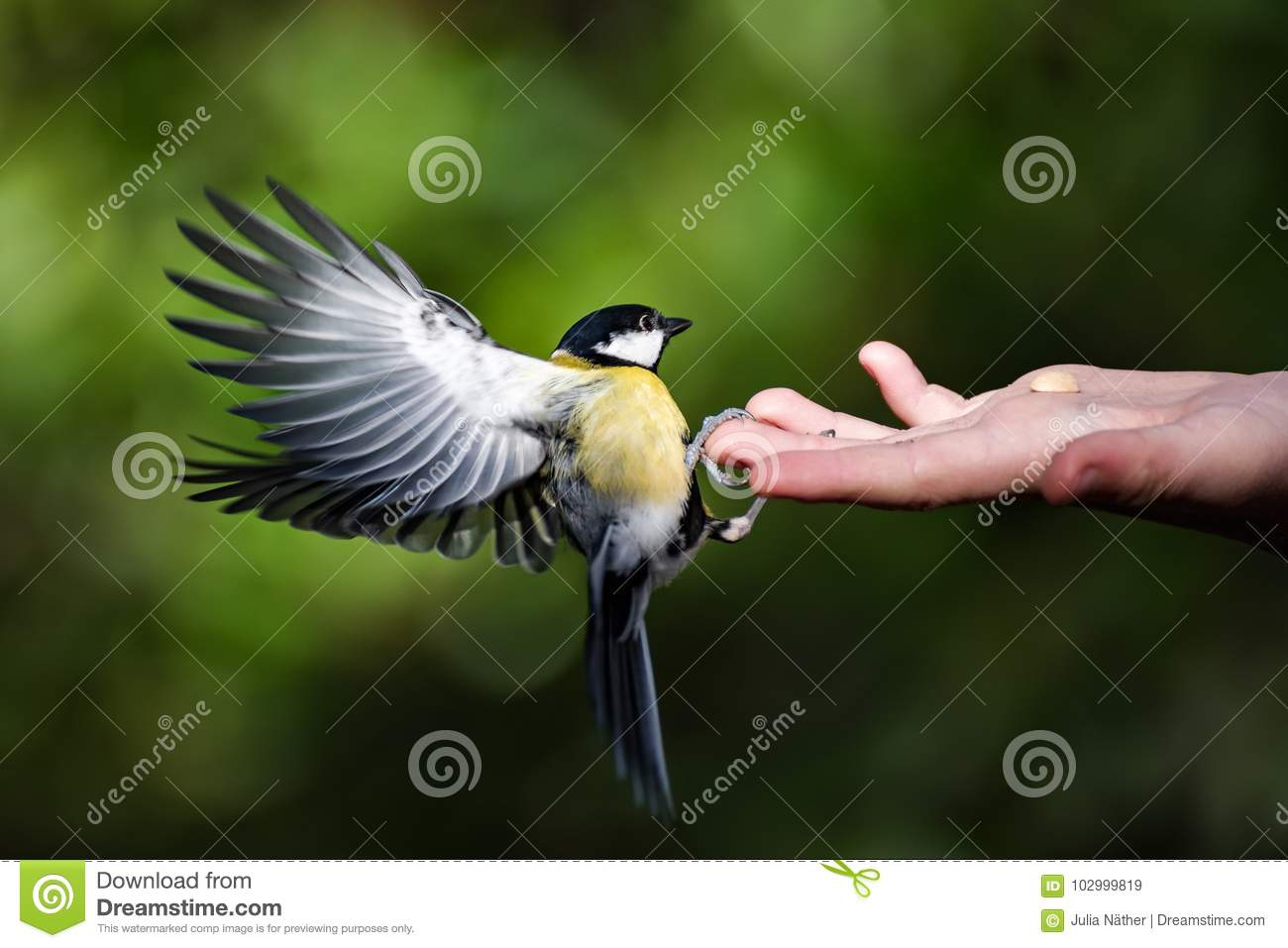 Tit can be fed by hand