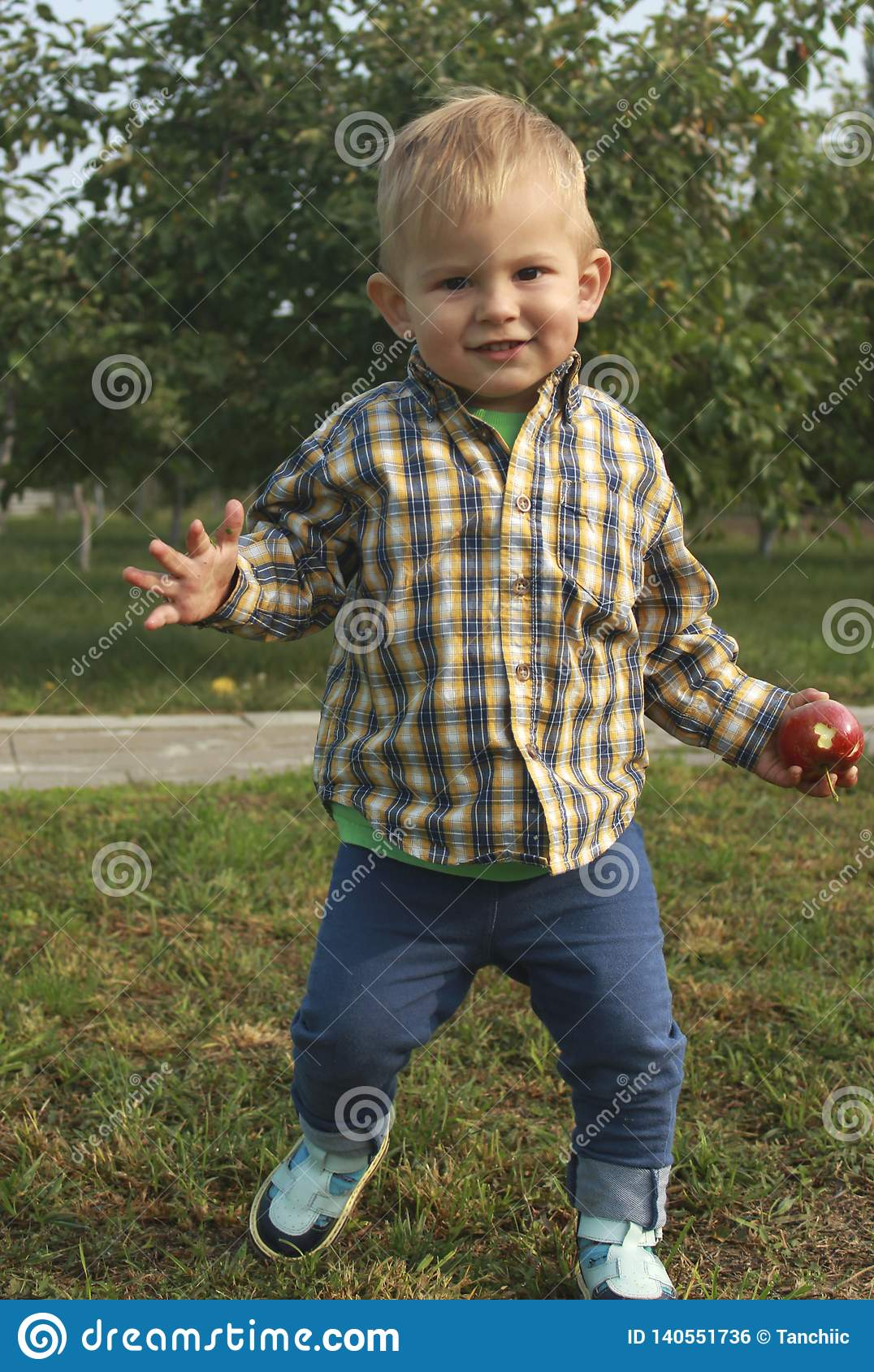 Little toddler boy picking and eating red apples in orchard