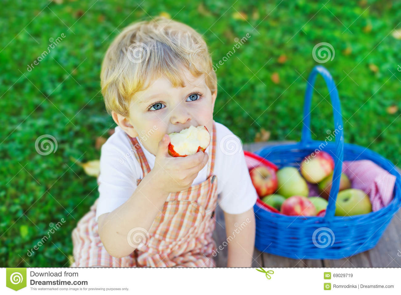 Little toddler boy picking red apples in orchard