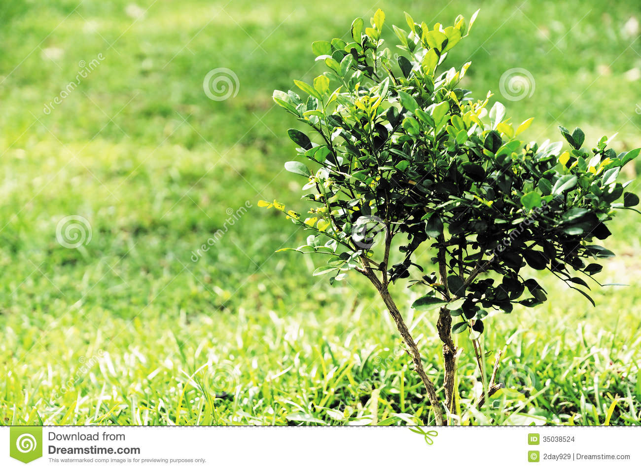 Little Tree Stock Images - Image: 35038524