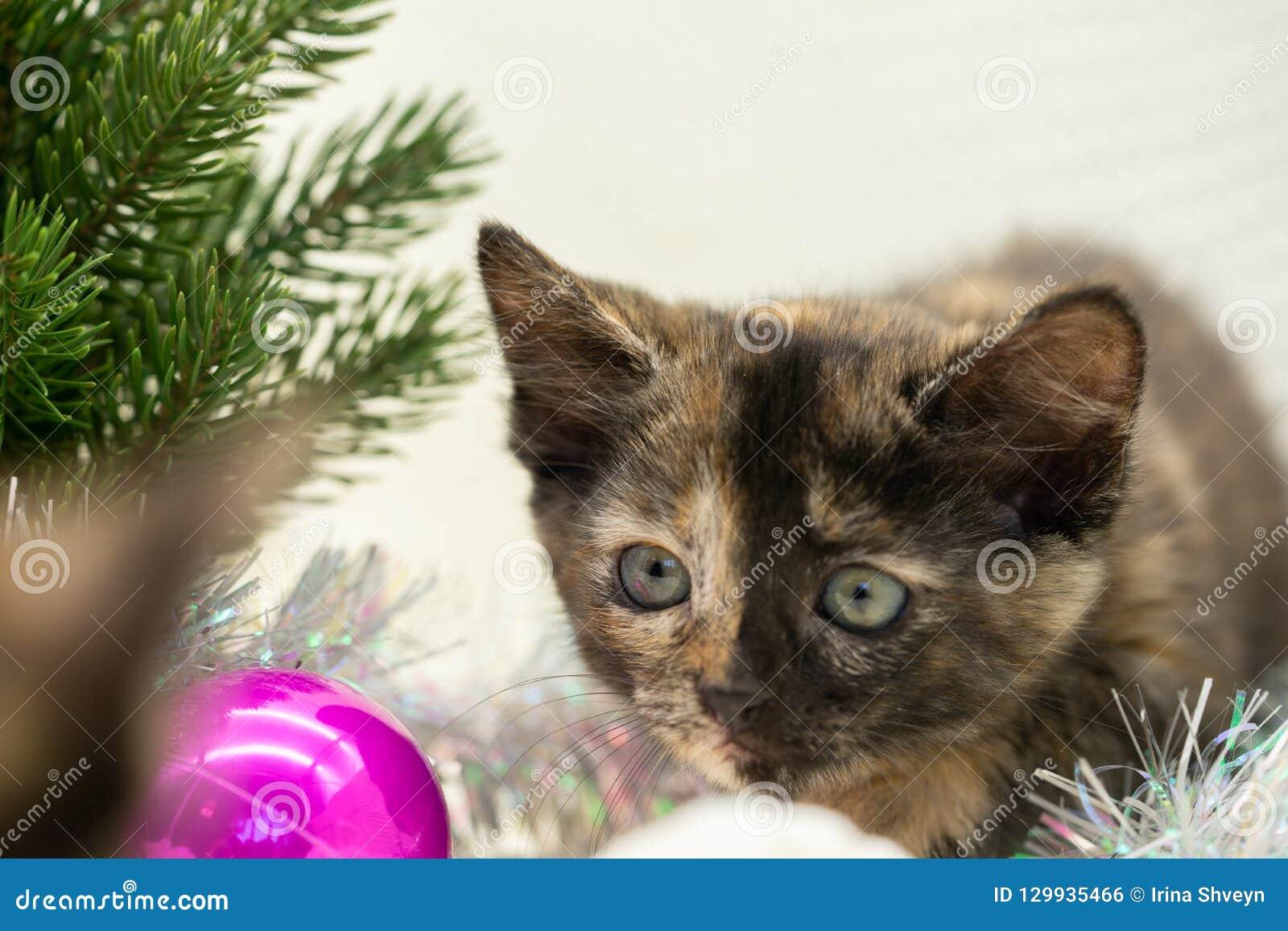 Little tricolor kitten hunts near the New Year tree
