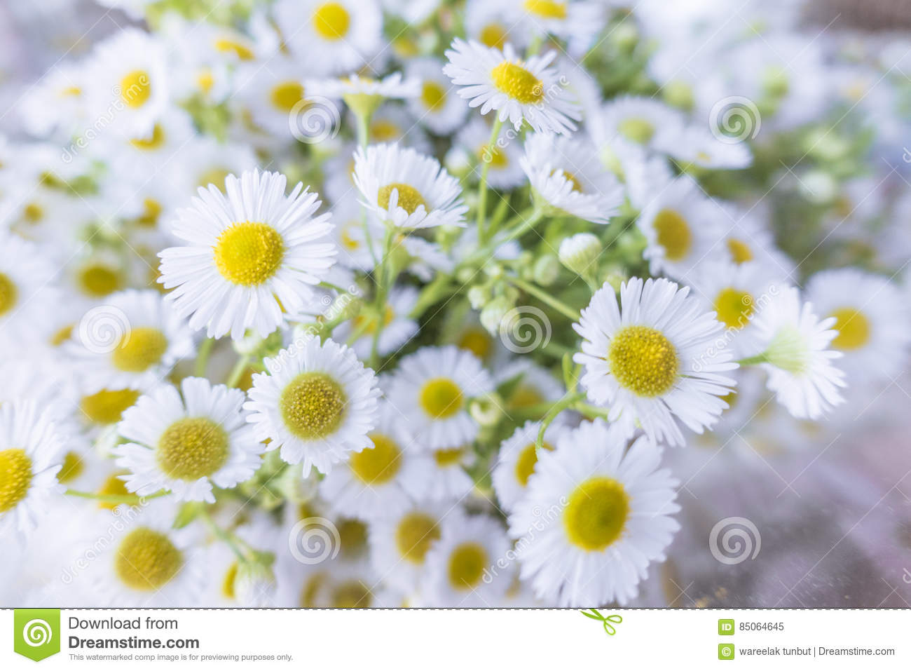 Little White Cosmo Flowers Bouque Stock Image Image Of Beaty