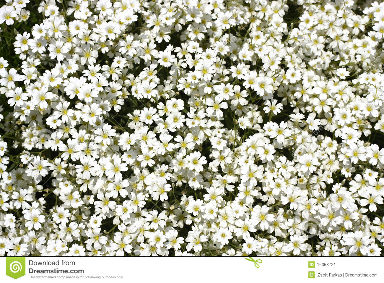 Little White Flower Stock Image Image Of White Petal 16358721