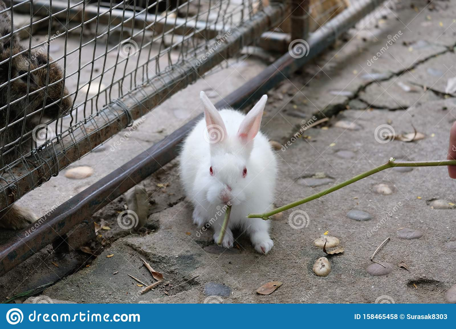 A little white rabbit in a zoo