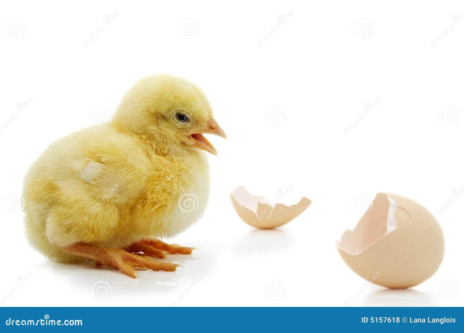 Cute chicken head chick sucks and fucks 4