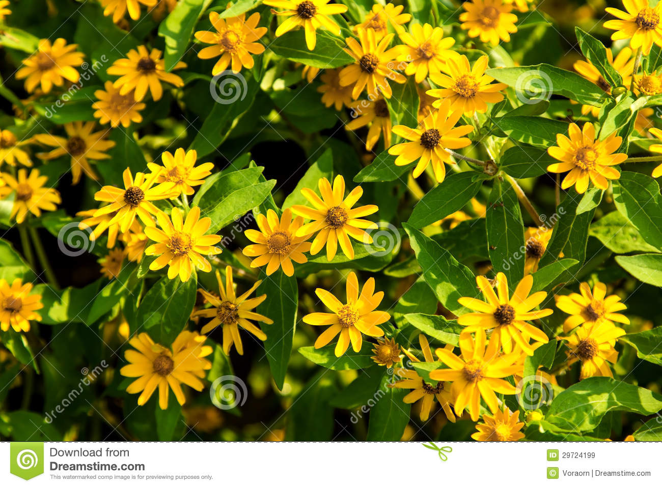 Little yellow flower stock image image of freshness 29724199 download little yellow flower stock image image of freshness 29724199 mightylinksfo
