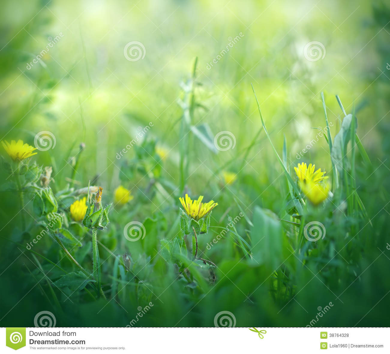 Little Yellow Flowers In Grass Stock Photo Image Of Meadow Bloom