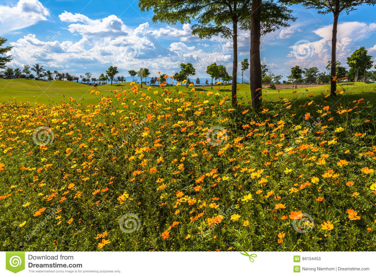 Little Yellow Flowers Beside The Green Field Stock Image Image Of