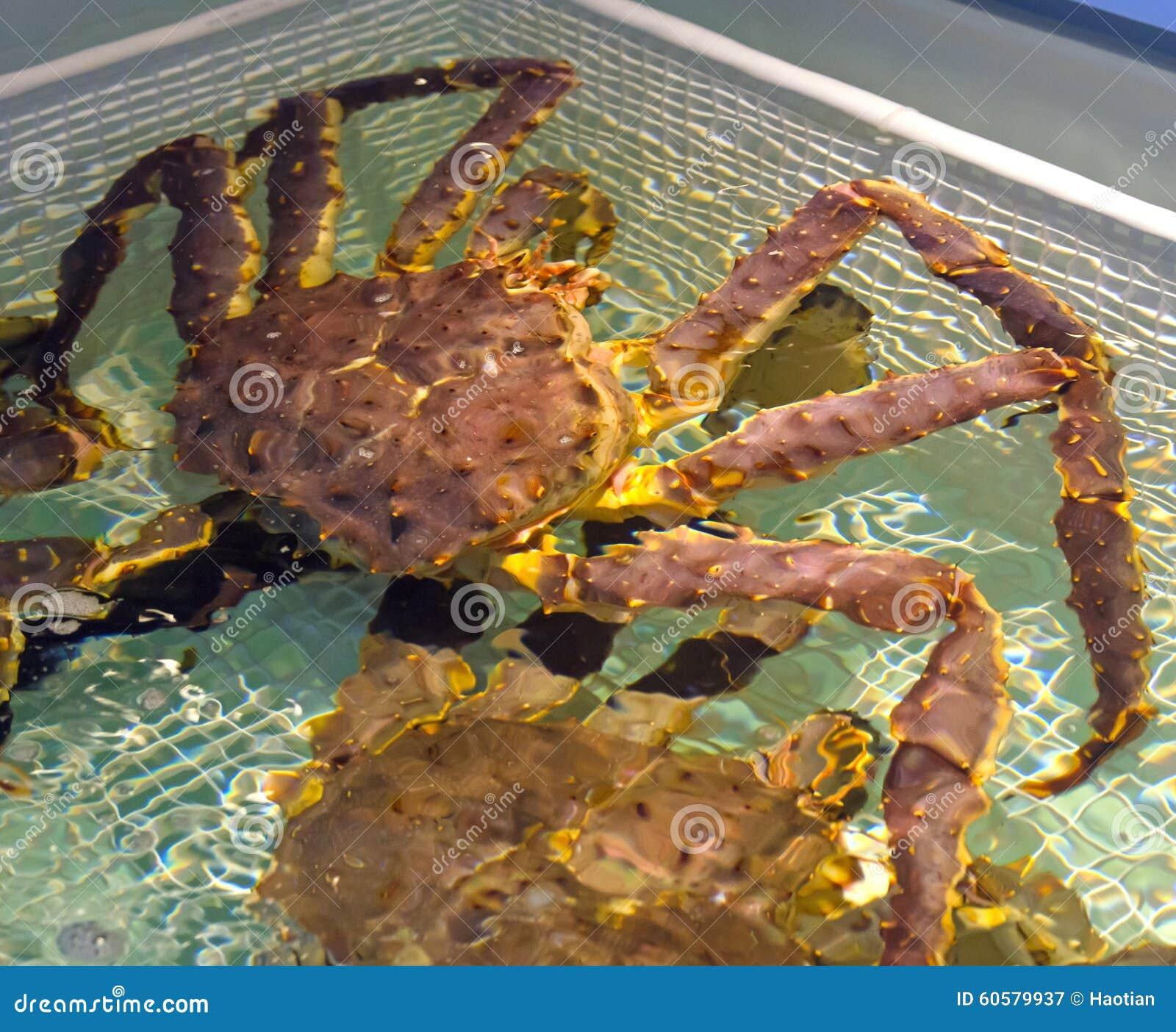 Live Alaskan Crabs