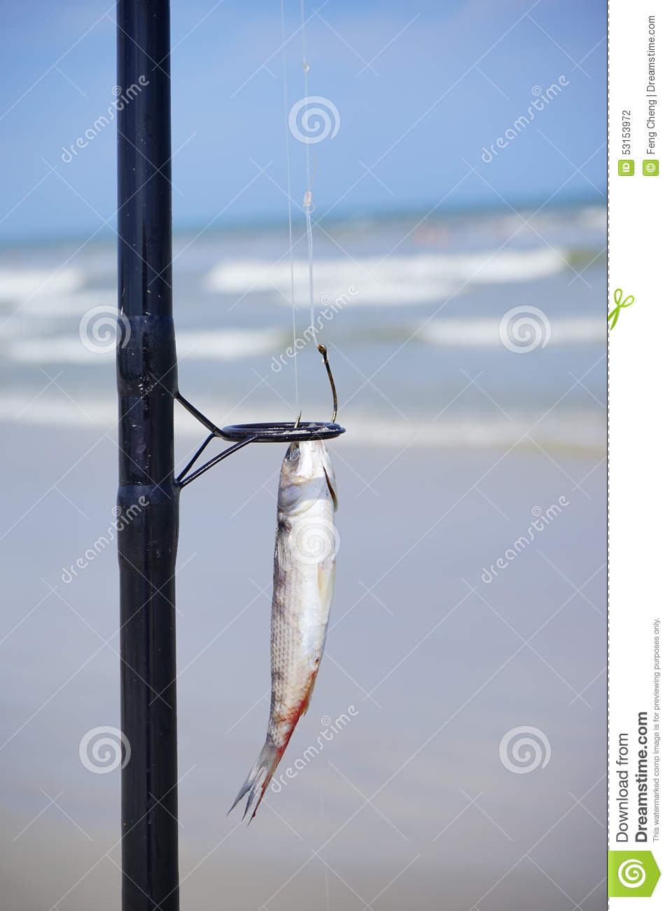 Bait stock photography 56888318 for School of fish lure