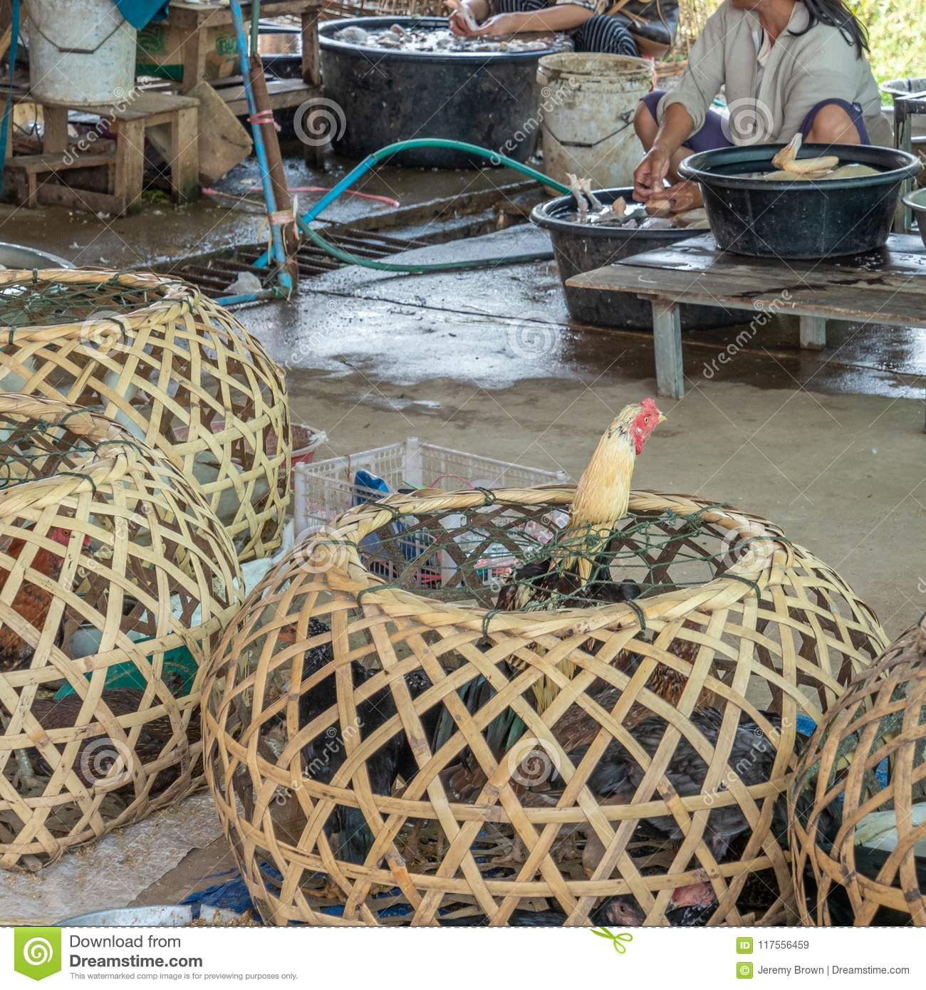 Live birds next to freshly slaughtered birds. Laos livestock mar