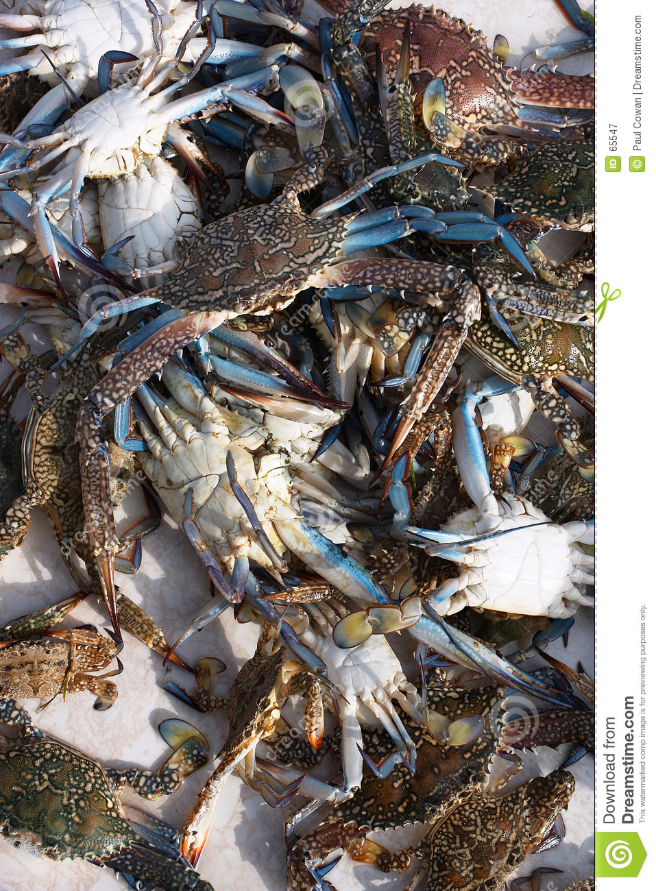 Live crabs from the Arab Gulf