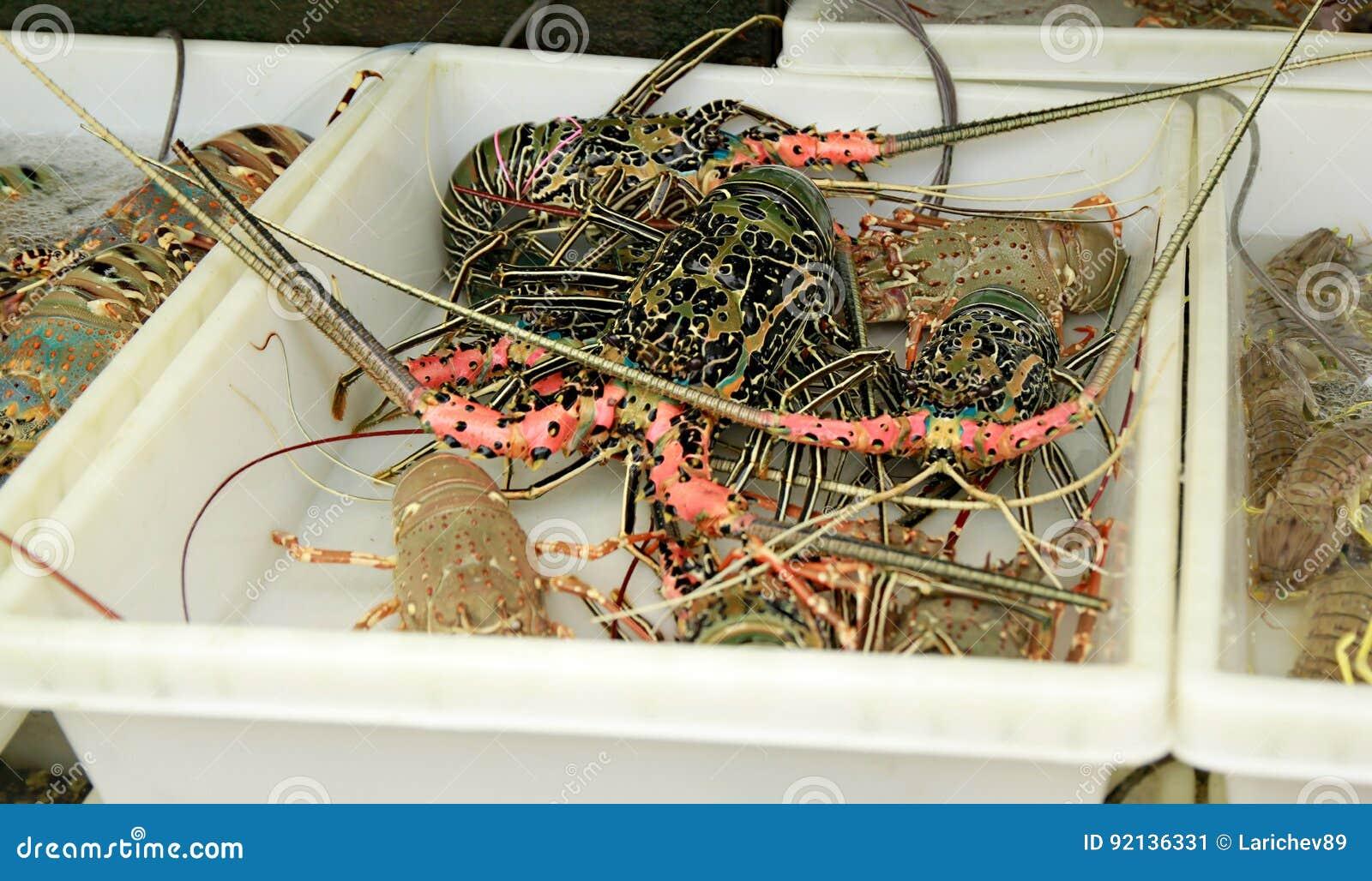 Live Lobsters no mercado de peixes Marisco
