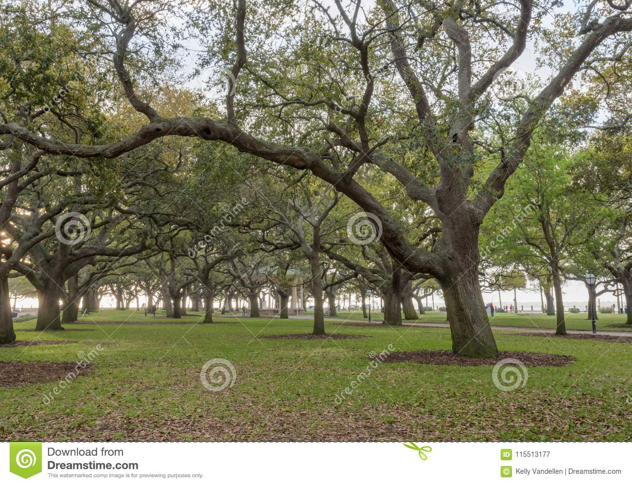 Live Oak Trees Stand At Attention In White Point Garden Stock Image ...