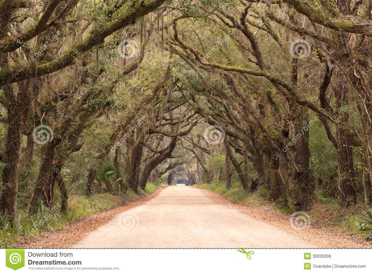 charleston sc botany bay dirt road spooky tunnel stock