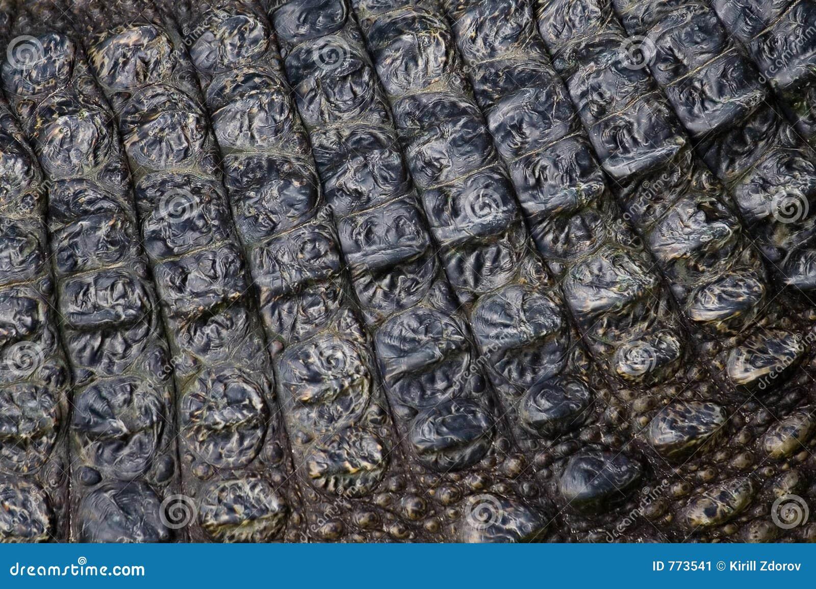 Live s hud för krokodil