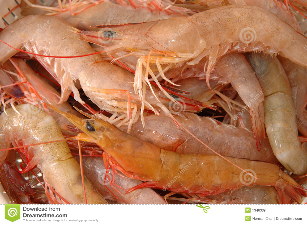 Live Shrimp Royalty Free Stock Images - Image: 1340339